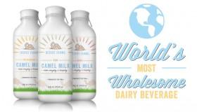La nouvelle boisson des hipsters californiens : le lait de chamelle !