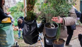 Vente de plantes à petit prix par la Mairie de Paris