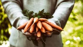 La carotte : l'allié bien-être