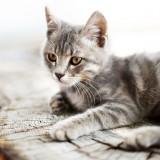 À Lyon, un bar à chats 100 % vegan va ouvrir ses portes