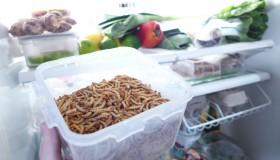 Élever des insectes comestibles à la maison ? Oui mais non !