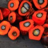 Tout savoir sur : l'huile de palme