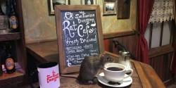 Un café à rats va ouvrir ses portes !