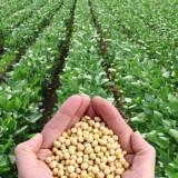 Les atouts nutritionnels du soja