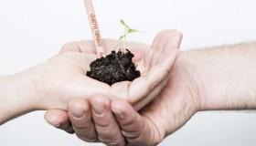 Sprout, le crayon à planter !