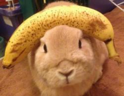 lapin banane