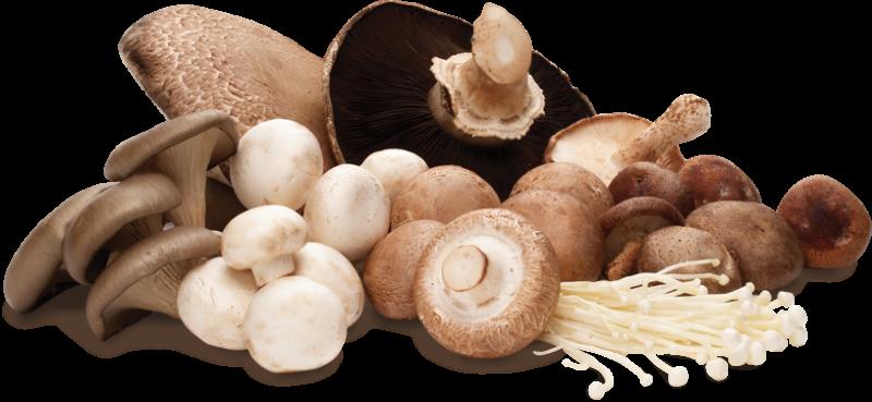 les-vertus-immunostimulantes-des-champignons-medicinaux