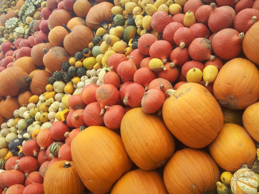 pumpkin-114039_1920