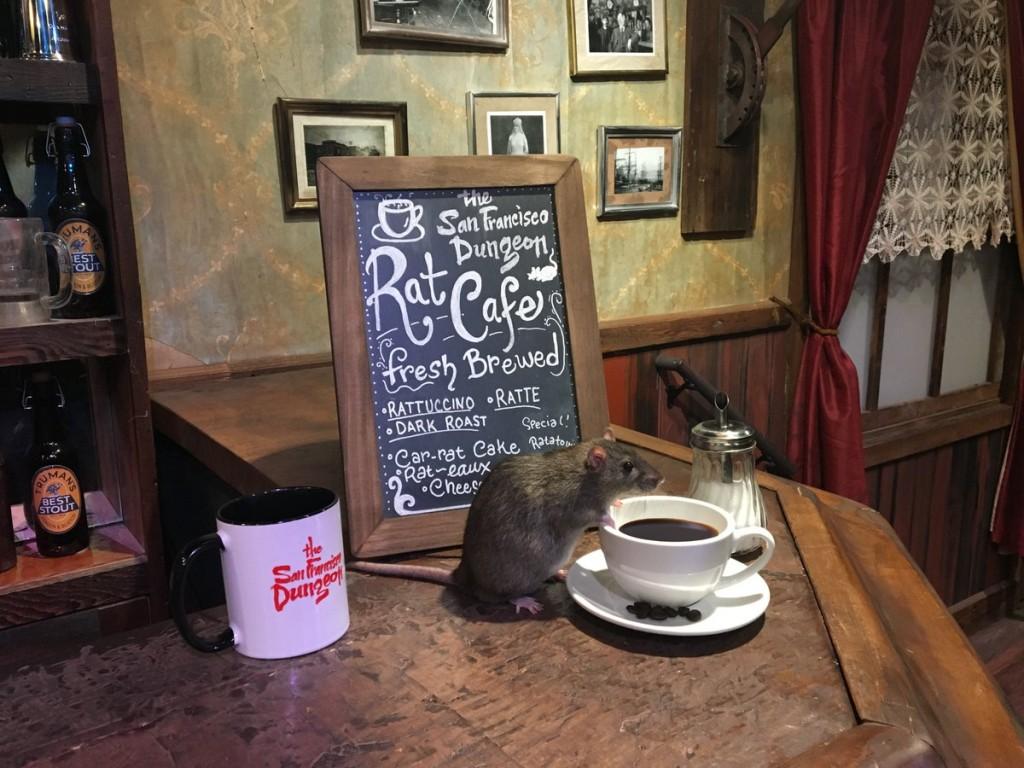 rat café