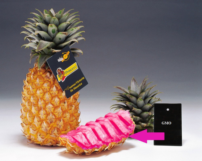 tropical-pink-pineapple-732962
